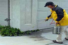 شركة رش المبيدات بجدة