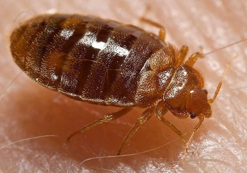 القضاء عي حشرات المنزل