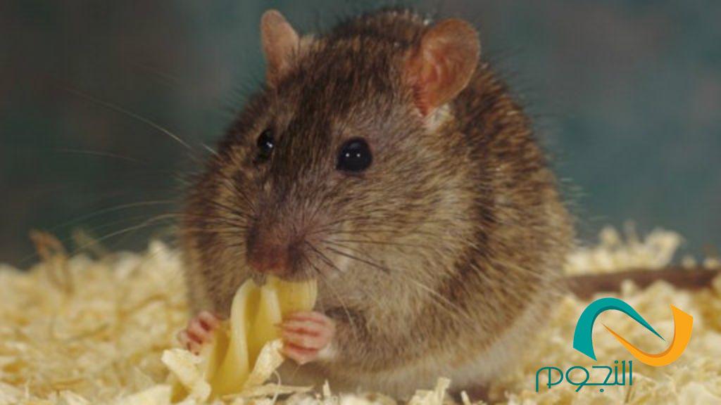 شركه مكافحه الفئران بجده
