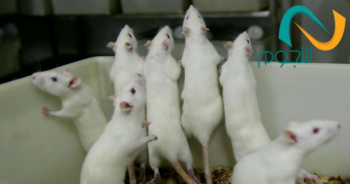 شركه مكافحه الفئران بمكه