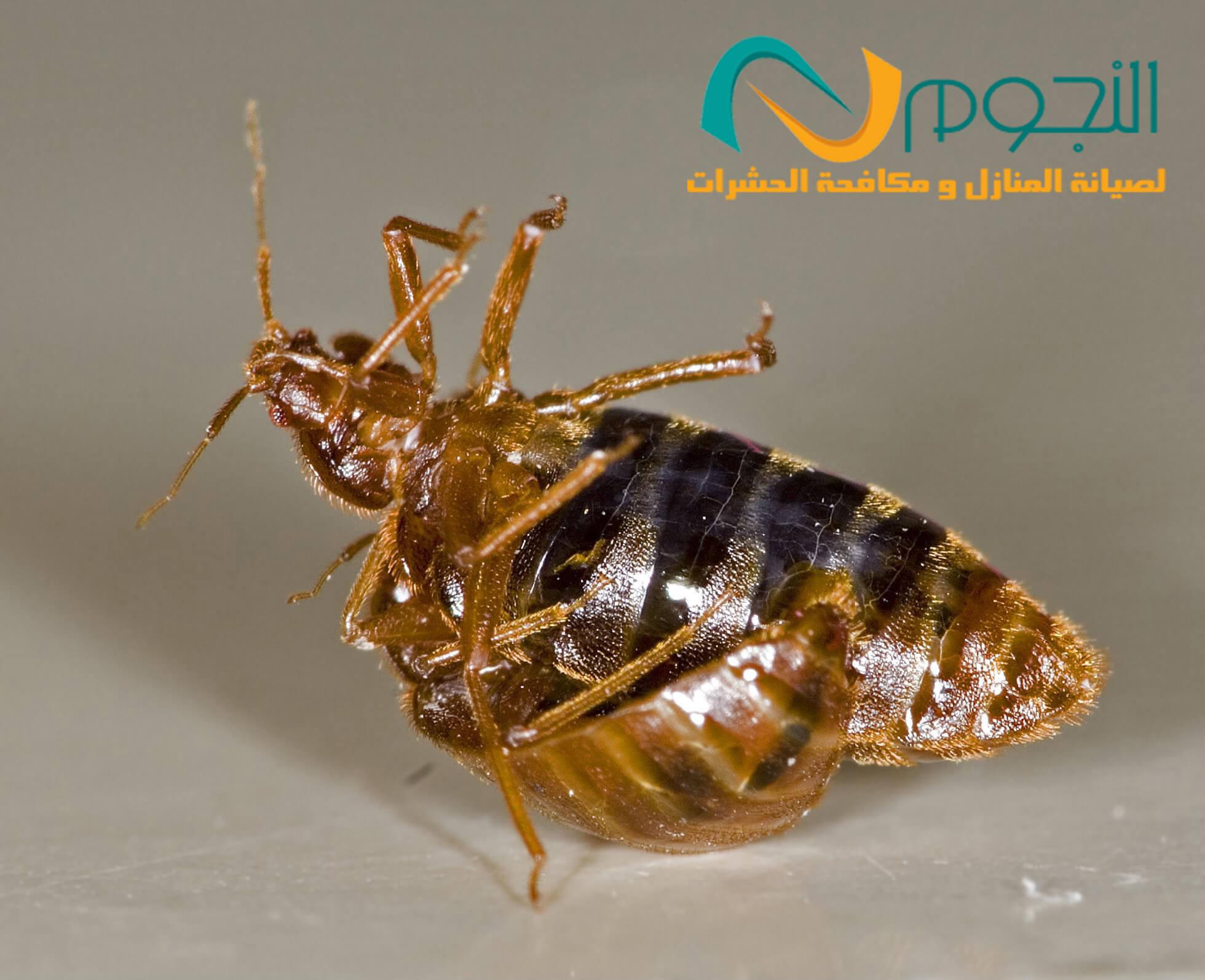 طرق طبيعية للقضاء على الحشرات