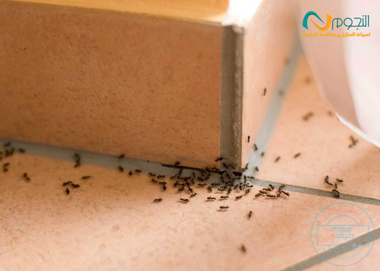 Photo of نصائح للقضاء علي الحشرات