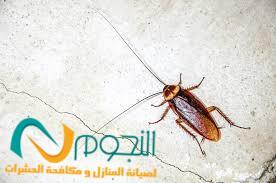 Photo of شركة مكافحة الصراصير بمكة