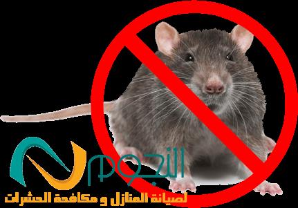 صورة شركة مكافحة الفئران بجدة