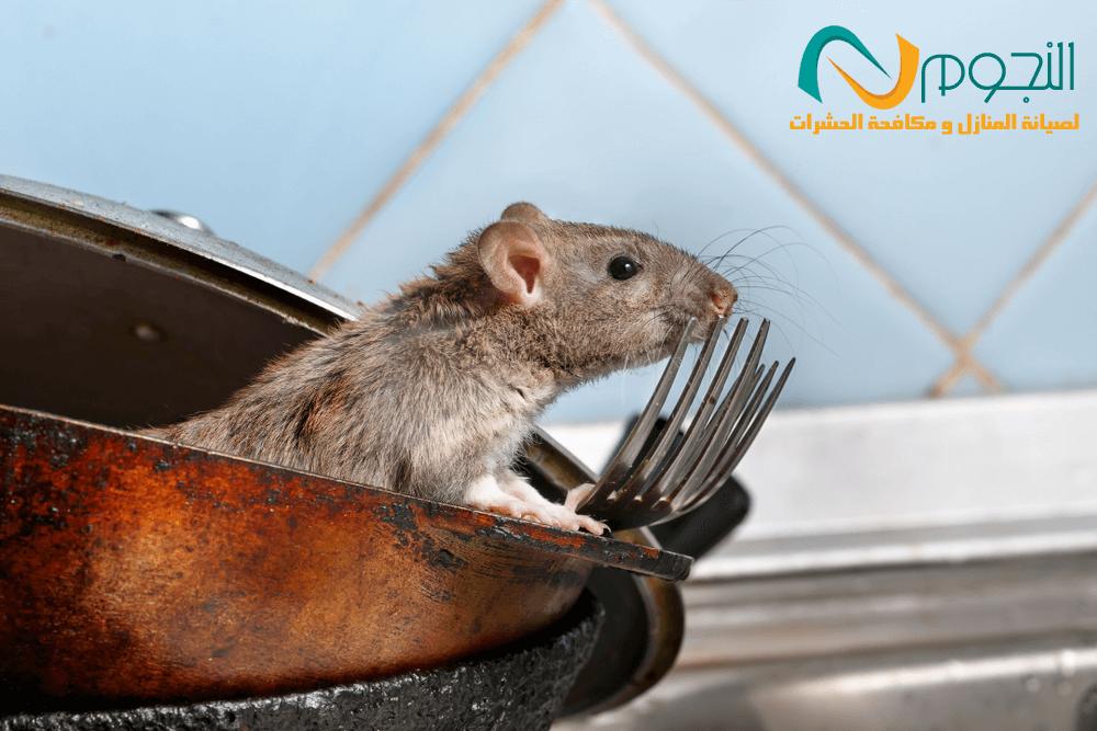 صورة شركة مكافحة الفئران بالطائف