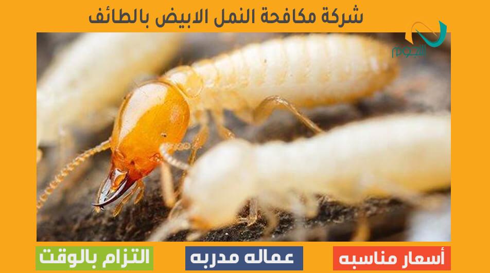 شركة مكافحة النمل الابيض بالطائف