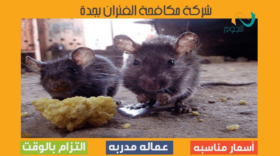 شركة مكافحة الفئران بجدة