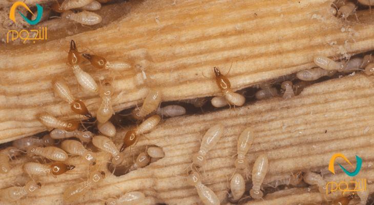 القضاء على النمل الابيض