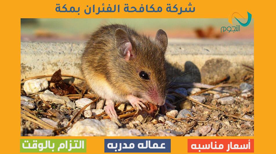 شركة مكافحة الفئران بمكة